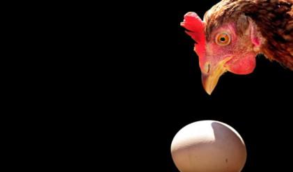 Кокошката се е появила преди яйцето