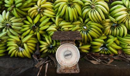 В полски супермаркети откриха банани с кокаин