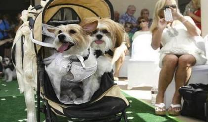 Кучешка сватба за 5000 долара