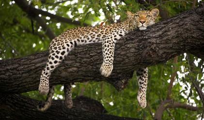 В най-красивия сафари парк в Африка (снимки)
