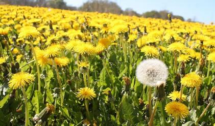 10 натурални средства срещу всякакви алергии