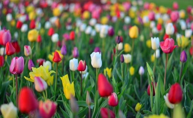 Днес православната църква празнува Цветница