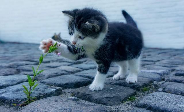 Домашните котки разпознават имената си, доказаха учени
