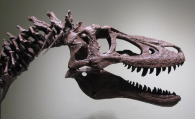 Продават останки от тиранозавър рекс в eBay