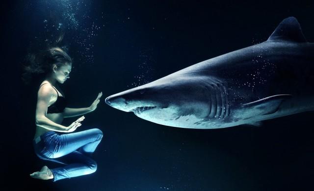 Най-големият страх на белите акули