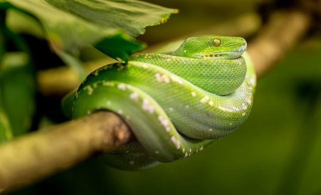 Фотограф засне някои от най-опасните създания на Земята (снимки)