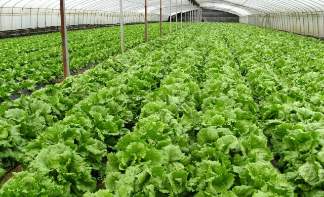 Зеленчукопроизводителите ще получат кредити за 30 млн. лв.