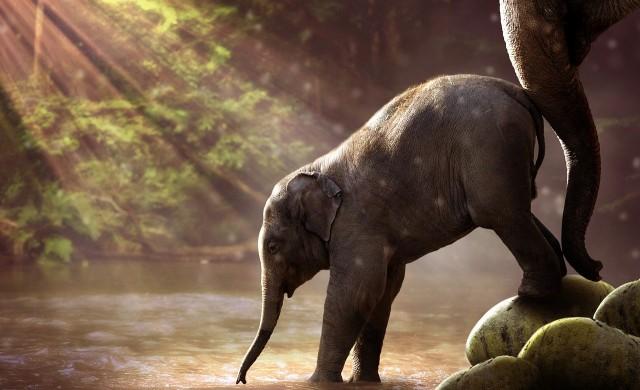 Спасиха слон, паднал в кладенец