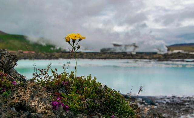 25 забавни факта за Исландия, които повечето хора не знаят