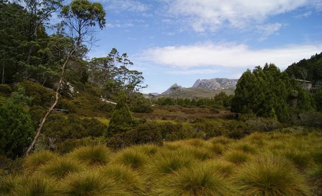 Кралската ломатия - растението на 43 хиляди години, което се клонира само