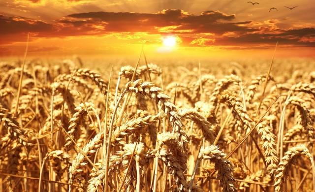 Каква част от европейската икономика заема земеделието?