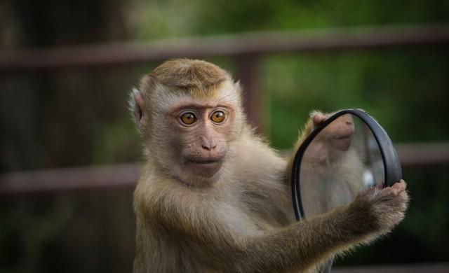 Маймуна алкохолик получи доживотна присъда в Индия