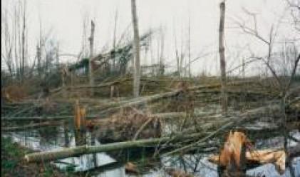 Буря засегна повече от 6 села в община Дулово