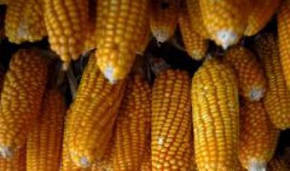 МВФ: 70% от увеличаването на цената на царевицата се дължи на биогоривата