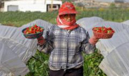 Индипендънт: Съдбата на земеделската реколта във Великобритания е предрешена