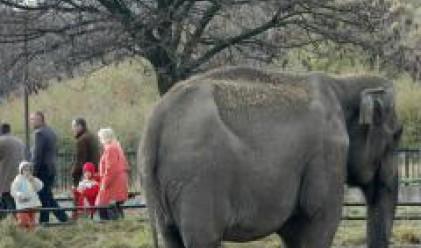 Столичният зоопарк става на 120 години