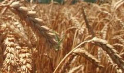Високите цени на земеделските продукти се запазват в близките 10 години