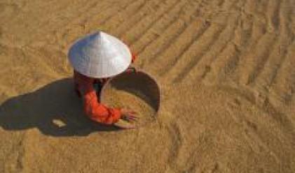 Над 820 хил. тона зърно има в складовете