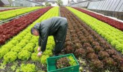Земеделската земя във Великобритания отчита значителен ръст в цената