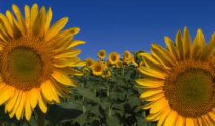 Печалба от 1.6 млн. лв. за Зърнени Храни България до март
