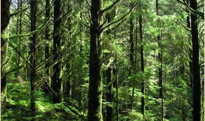 Една пета от горската сеч в България е била незаконна
