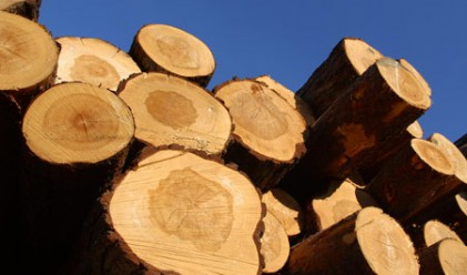 Фазерлес: Цените на дървесината скачат с 20–25% ежегодно