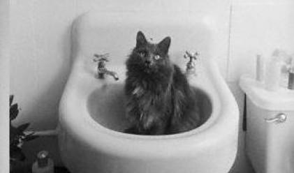 Котка обича... да мие чинии