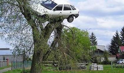 """Поляк откри колата си """"кацнала на едно дърво"""""""