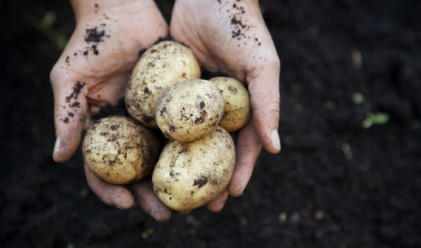 Картофите са новата супер храна