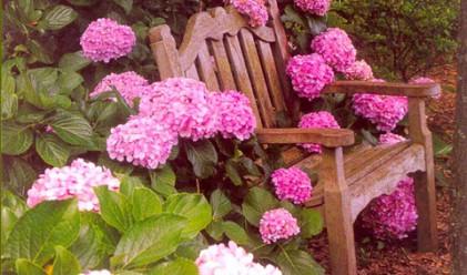 Американец върна откраднати преди 54 години цветя и си върна душевния мир