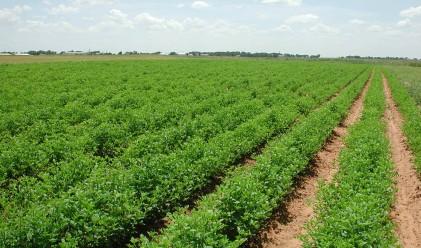 Губим 98 милиона лева от ЕК за земеделие
