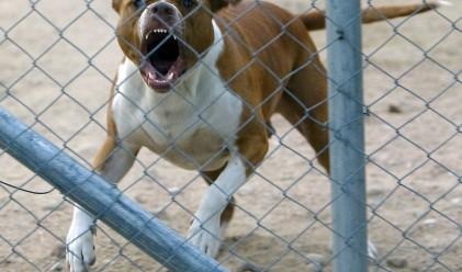Кучешки ухапвания струват 479 млн. долара на щатските застрахователи