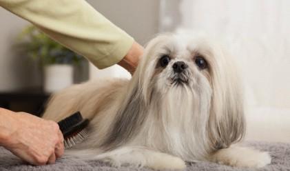 3 милионa долара на шията на куче