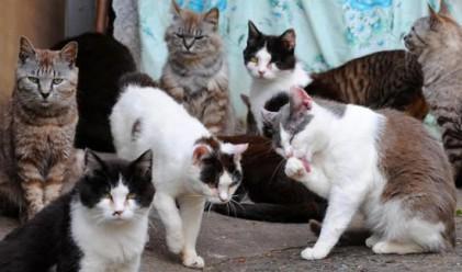 Как котките реагират на земетресенията