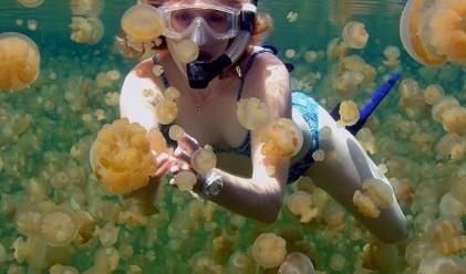 Да се гмурнеш сред хиляди медузи – видео