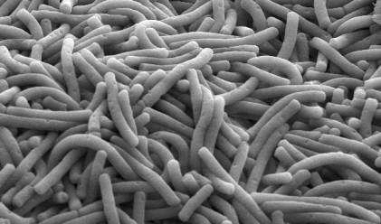 Българин, завършил в Харвард, откри уникална полезна бактерия