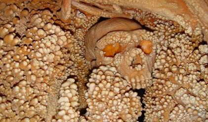 От този скелет е извлечено най-старото неандерталско ДНК