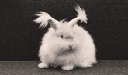 Защо нацистите са отглеждали зайци в Аушвиц
