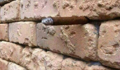 Не виждате нищо по-различно в тази стена? Погледнете пак!