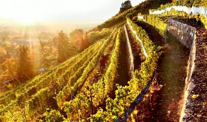 Страните, в които пият най-много вино