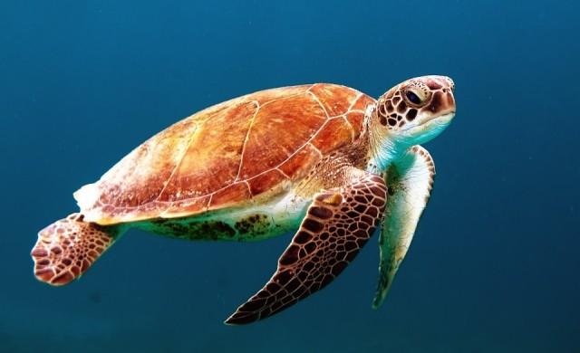 Остров Сипадан и Пещерата на костенурките