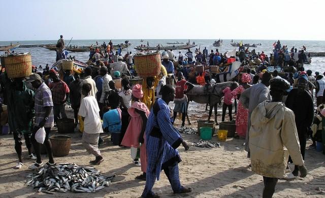 Оризовата революция в Сенегал може да служи за пример в Африка