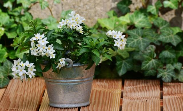 5 стайни растения за хора, които имат проблеми със съня