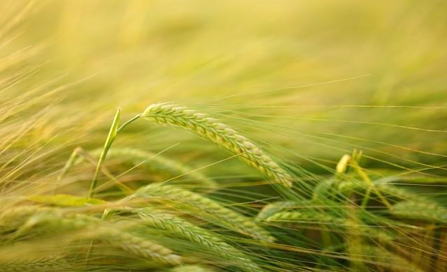 Производствените цени на селскостопанските стоки намаляват
