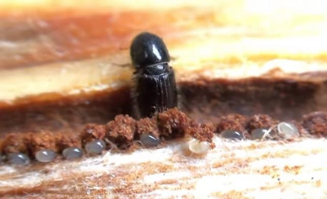 Тези малки насекоми могат да струват 625 млн. долара на Швеция