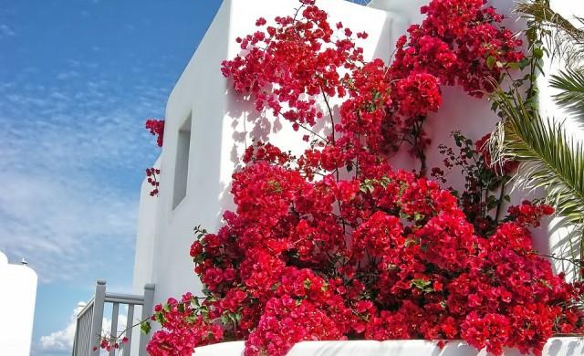 Осемдневен all inclusive круиз до най-красивите гръцки острови