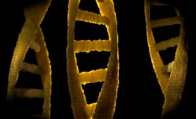 Откриха човешка ДНК в дъвка на 10 000 години