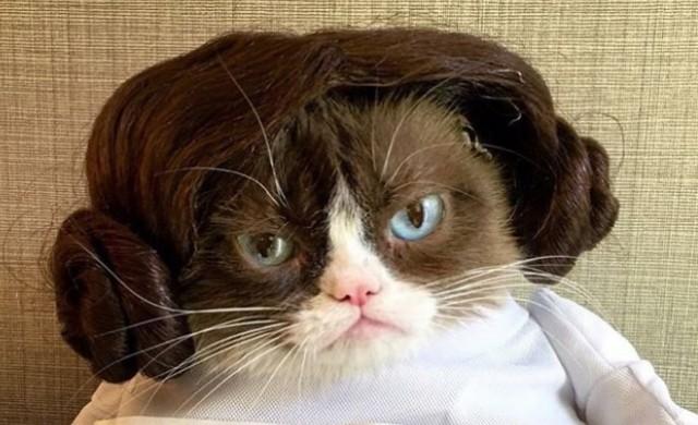 Какво следва след смъртта на една от най-популярните котки?