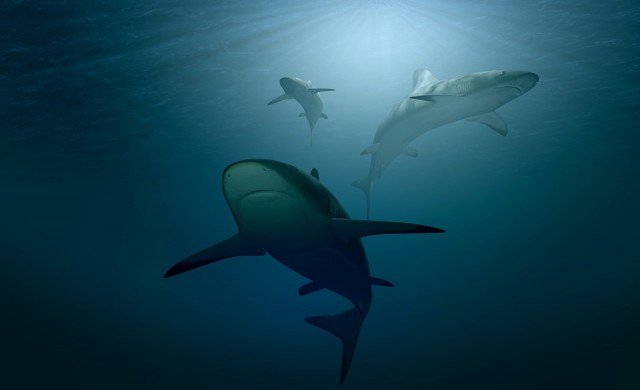 Да се гмуркаш с акули в сърцето на пустинята
