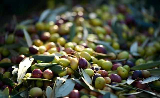 Как митата на Тръмп осакатиха испанската маслинена индустрия?